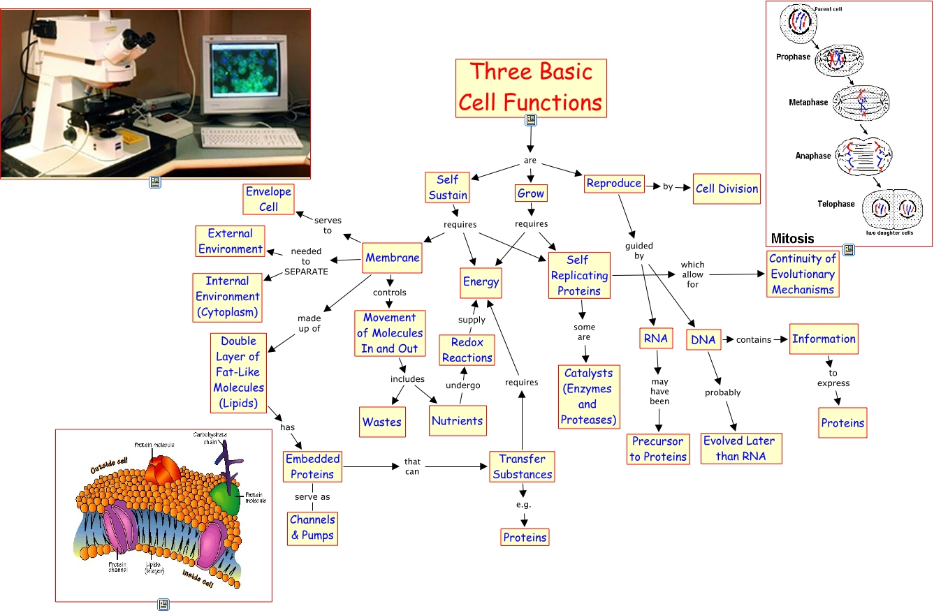 A155 basic cell functions ccuart Images